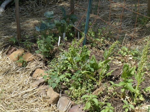 bolted spinach