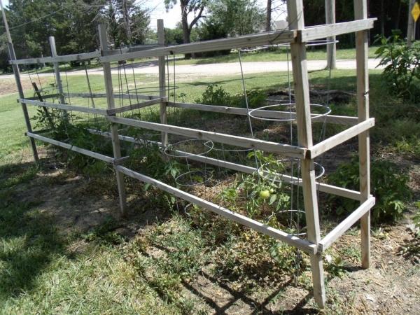 permanent tomato cage