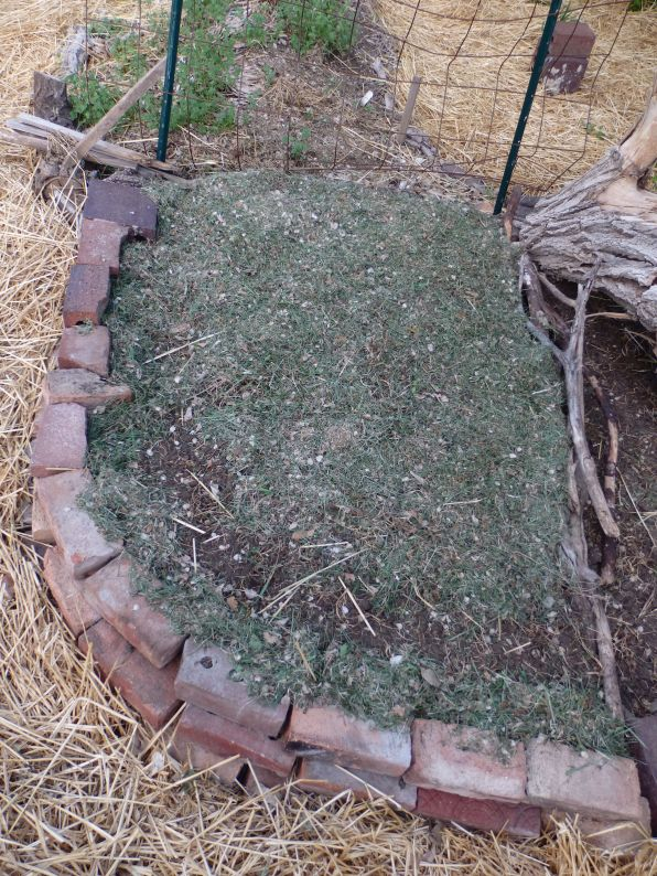 A newly prepared garden bed, this area has beet seeds pending germination, and will serve as the canteloupe ground.